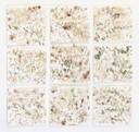 """SelvaAmazonica"", Naturfarben auf Papier, 60 x 60 cm, 2018"